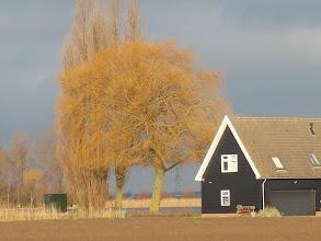 Photo: Treurwilg Munnikenweg aan de Binnenmaas, Westmaas
