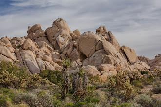 Photo: Mojave National Preserve, California.