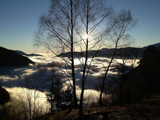 La nebbia, sotto. di laura62