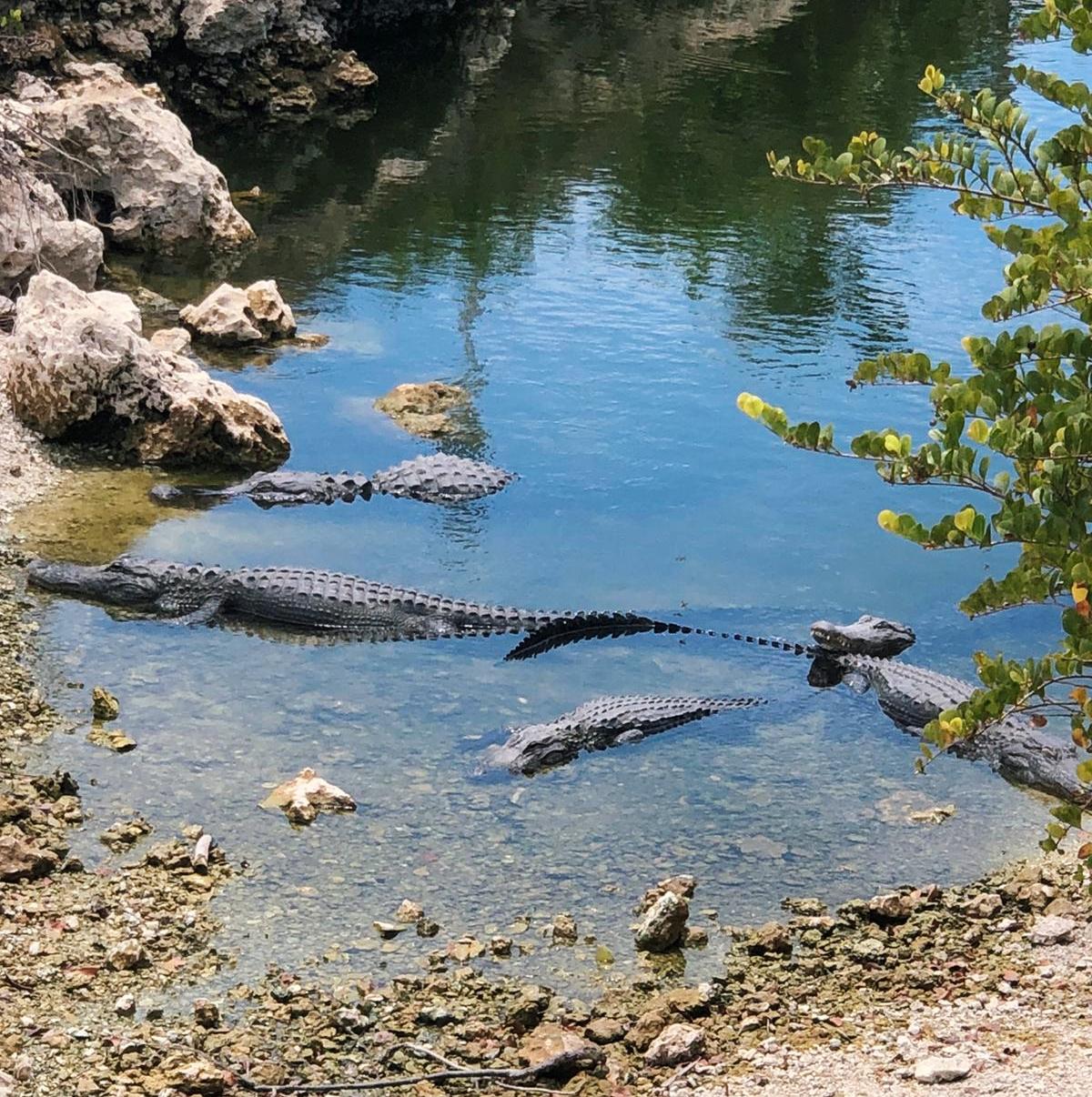 אטרקציות בפלורידה פארק לאומי אברגליידס