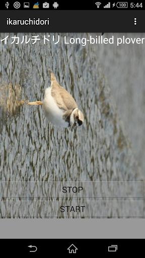 無料娱乐Appの鳥の鳴き声イカルチドリ|記事Game
