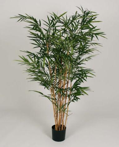 Royal Bamboo Tree - 140cm & 179cm