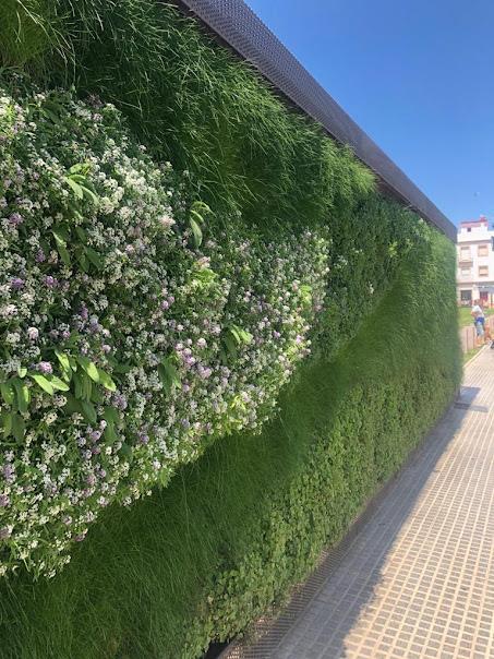 Foto del buen estado del jardín de sistema LeafSkin en San Fernando de Cádiz
