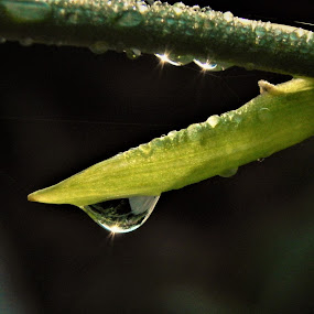 Rain_2 by Michelle Kelly - Nature Up Close Natural Waterdrops