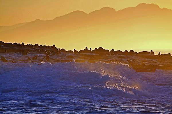 Luci dell'alba sull'isola delle otarie di simonpro
