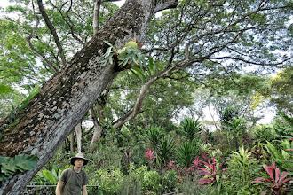 Photo: Singapore Botanical Gardens