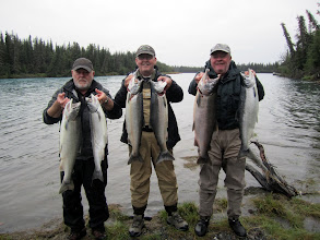Photo: A limit of Kenai river Silver salmon.