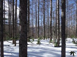 三角点は雪の下