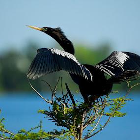 Bird Sitting by Jack Goras - Animals Birds ( bird, flying, sitting, nature, fly, nature up close, bird flying,  )