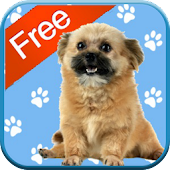 Puppy Games for Kids - Free