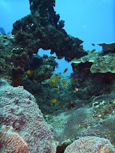 Photo: Coral reef at 2 mile / Korálový útes na 2 mílích