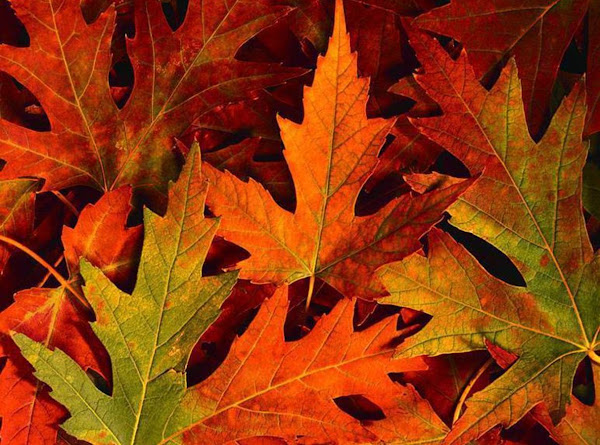 Fall Flavored Face And Body Beauty Treatments Recipe