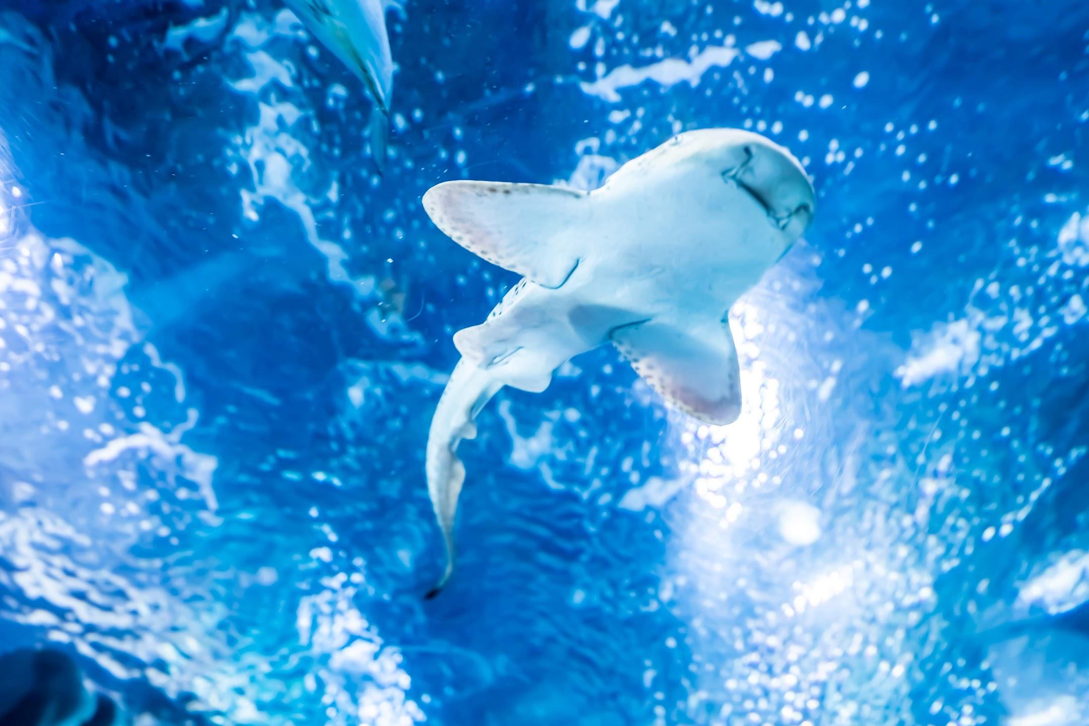 Shanghai Ocean Aquarium5