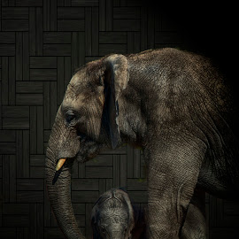 dark elephants by Egon Zitter - Animals Other Mammals ( protection, elephants, youngster, dark, taking care off, big, cub )