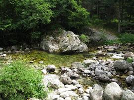 Целогодишно забранени реки за риболов за 2014