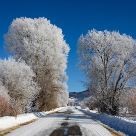 Frosty Trees by Chad Roberts - Nature Up Close Trees & Bushes ( blue sky, road, snow, winter, cold, trees, frosty )