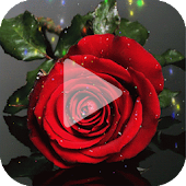 Red Rose Animated Wallpaper