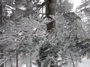 凍てつく木々