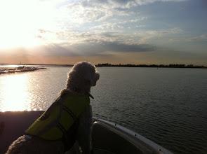 Photo: 2010-11-23 sophie golden doodle lake trip november in texas
