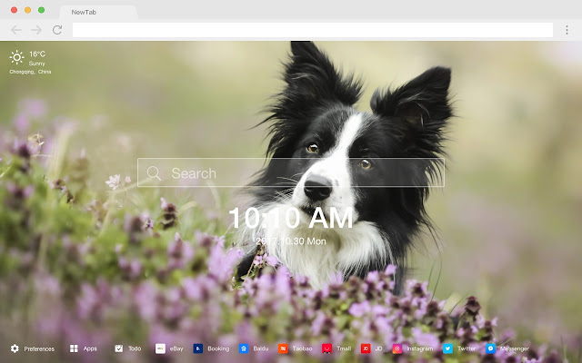 Border Collie Hot Dog HD New Tabs Theme