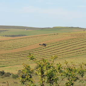 Overberg Harvesting by Quentin Nothling - Landscapes Prairies, Meadows & Fields