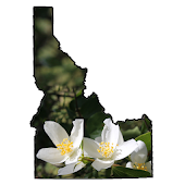 Idaho Wildflower Search