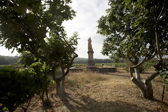 Photo: Château La Moutète. AOC Côtes de Provence. Cuers. Var