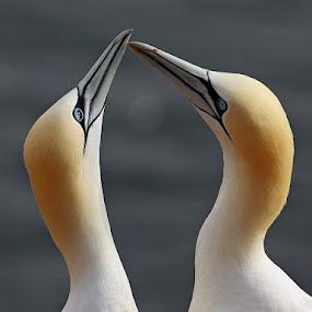 Lovers by Blaz Crepinsek - Animals Birds ( Love is in the Air, Challenge, photo,  )