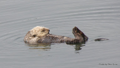 Photo: (Year 3) Day 20 - Otter Floating #4