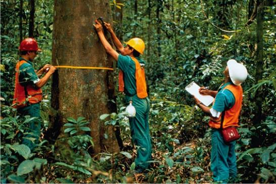 Madeiras de Lei, a beleza natural em sua casa - Madeiras da Amazônia