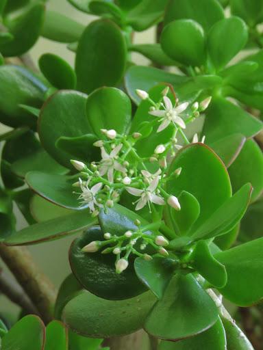 Mes petites plantes grasses et cactées - Page 3 O62wTUYp9mpCaJ_q-Tg-KyzysOa9FA7ORQHwxNHJTA9oaphEldjWegJLGHmmxiOyxrDaC1JXESZRvjxUV397_BXlkO1A9Nza8514oJfdntLueSNXSGoqMexodkCT_6rdJ_QOFyd_jnI