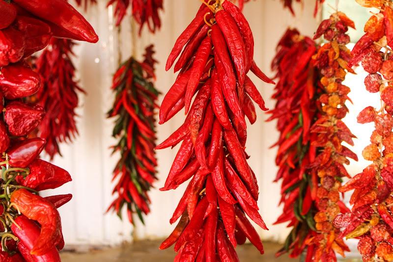 Rosso di caterina_kitta
