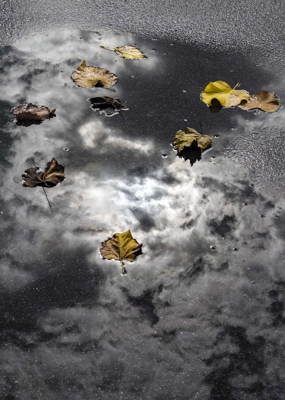 Cielo grigio su...Foglie gialle giù... di alfonso gagliardi