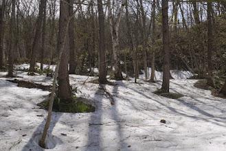 Photo: 入山するとすぐに雪が