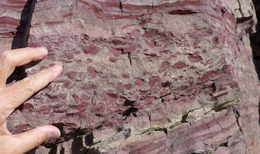 Photo: Rip-Up Clasts in the Belt Supergroup