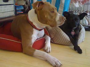 Photo: Malia at home with Daphne in Santa Monica, CA