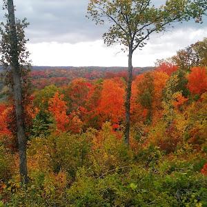 falltrees2.jpg