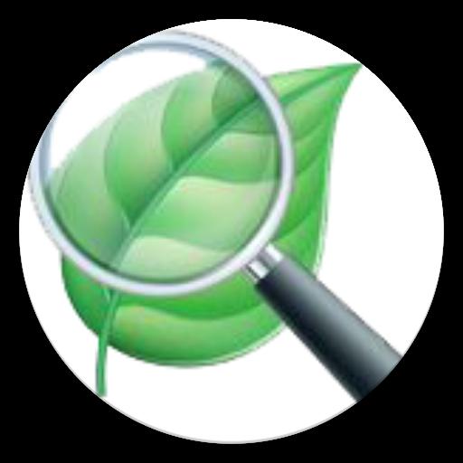 OpenCV Leaf Detect