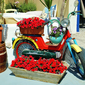 Santorini Scooter by Amanda Dacey - Transportation Motorcycles ( greece, kamari, flowers, cyclades, santorini, scooter )