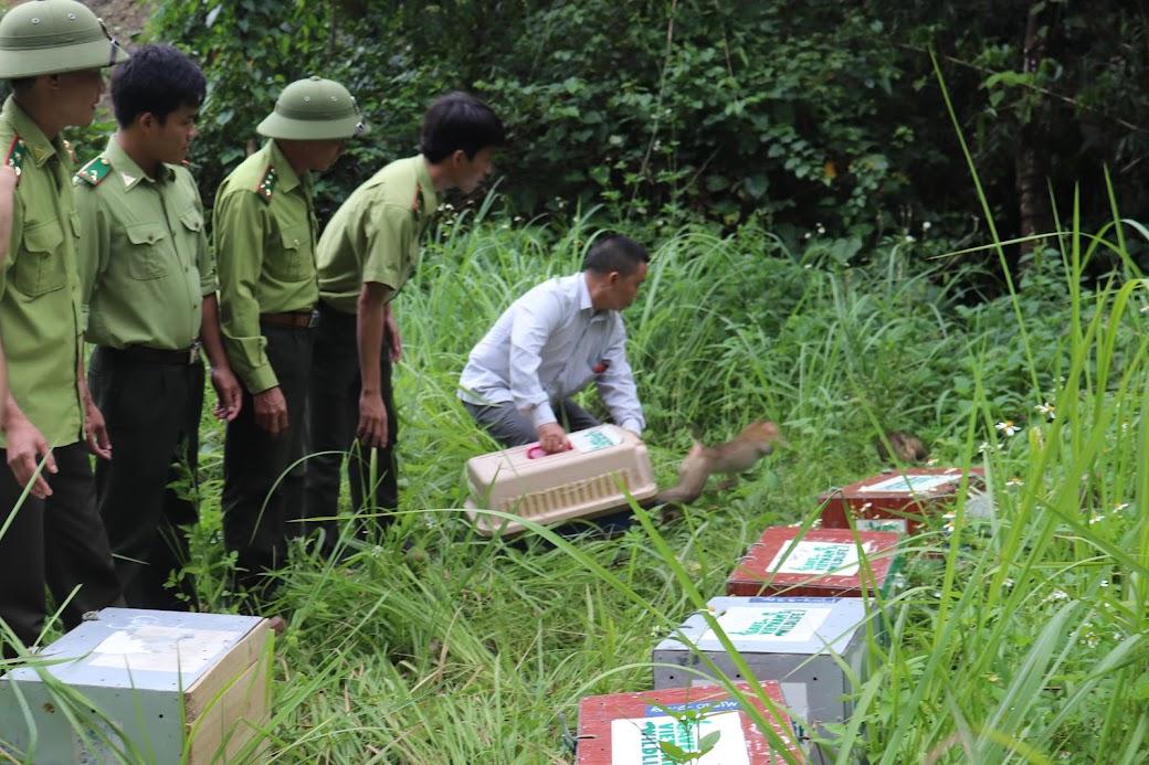 Cần chủ động đấu tranh ngăn chặn, phòng ngừa các hành vi xâm hại tài nguyên rừng (Trong ảnh: BQL Khu Bảo tồn thiên nhiên Pù Hoạt phối hợp với Trung tâm cứu hộ động vật hoang dã Vườn quốc gia Pù Mát tái thả các cá thể khỉ về rừng tự nhiên sau khi cứu hộ)