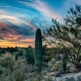 Tucson, Sunset by Charlie Alolkoy - Landscapes Deserts ( sky, sunset, arizona, tucson, sunrise, cactus )