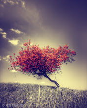 Photo: Those that have followed my work in the past will know this tree, it holds a fascination for me, it sits on a small hill and has been bent and twisted by the wind that constantly blows there. Its growth stunted by the fact its simply trying to stay upright.