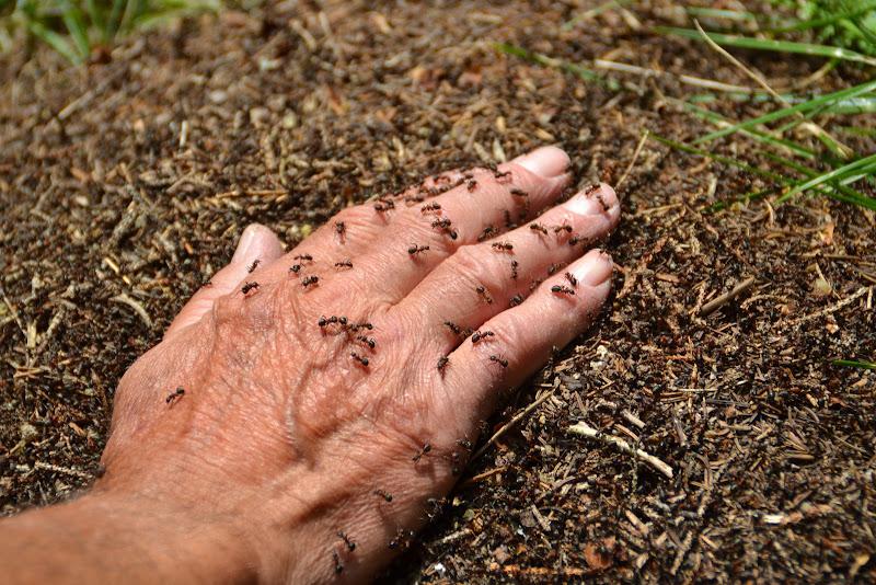 Ho uno strano formicolio alla mano.. di vaiolet