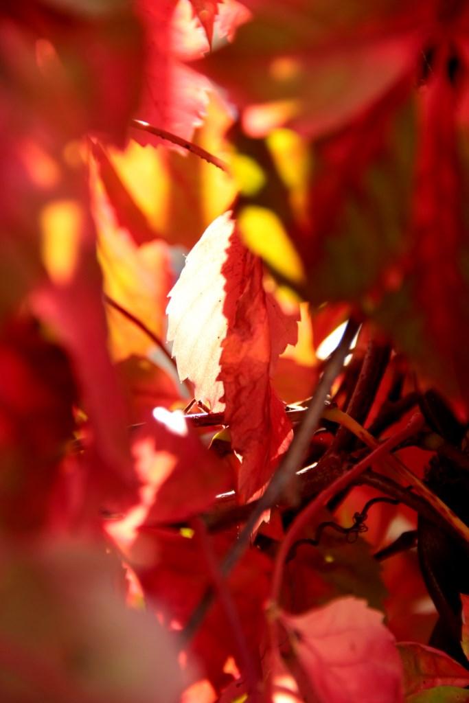 Autunno Rosso di Lina Franquillo