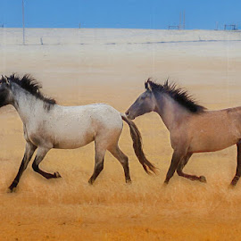 Spanish Mustangs by Jerry Cahill - Animals Horses
