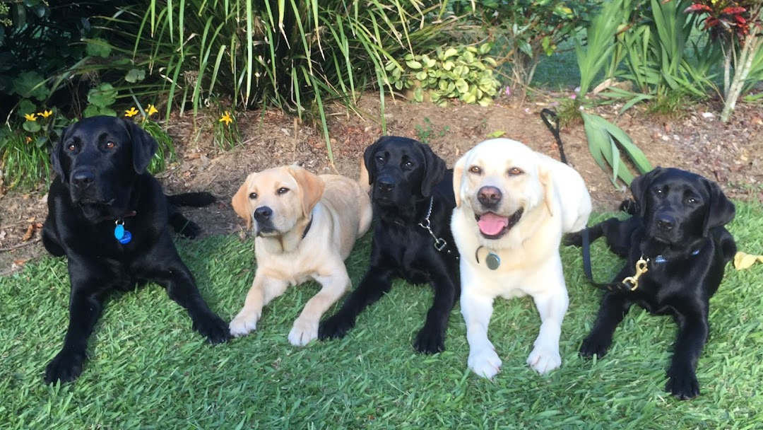 K9 Tales: Training and Assistance Dogs - Dog Trainer in Sunshine Coast