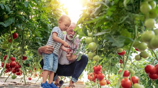 Agroponiente redobla la atención al agricultor en la nueva campaña