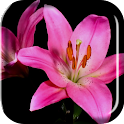 Blooming Flowers Live Wallpap icon
