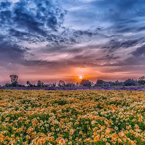 Colors by KP Singh - Flowers Flower Gardens ( punjab, langrian, beauscape, malerkotla, dhindsa,  )