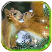 Squirrels Gallery Live Wallpaper Android APK Download Free By SweetMood